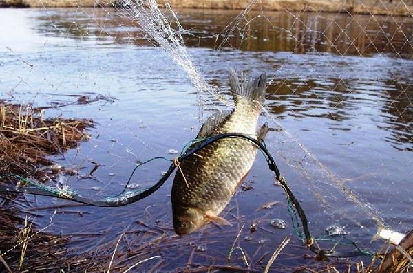 За вихідні зафіксовано 5 порушень, - рибоохоронний патруль Луганщини