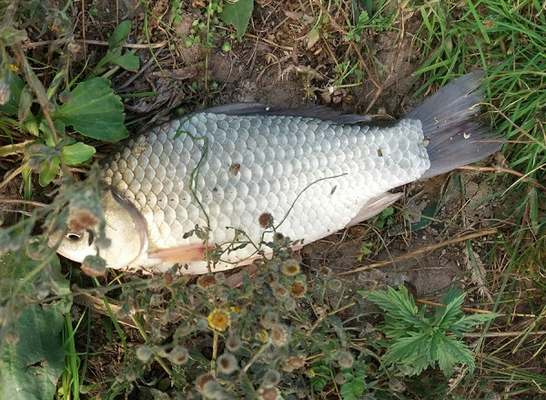 Протягом тижня зафіксовано 13 порушень, - рибоохоронний патруль Луганщини
