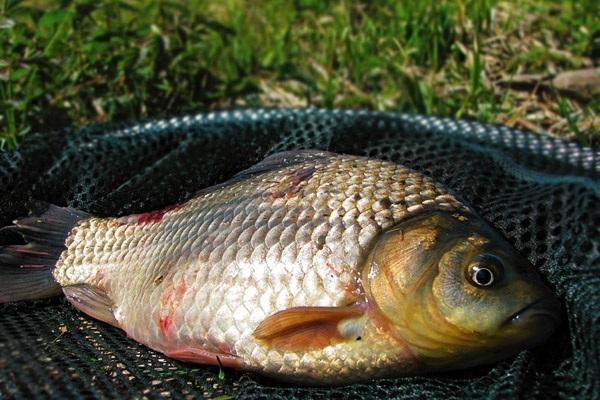 Протягом двох днів роботи зафіксовано 11 порушень, - рибоохоронний патруль Луганщини