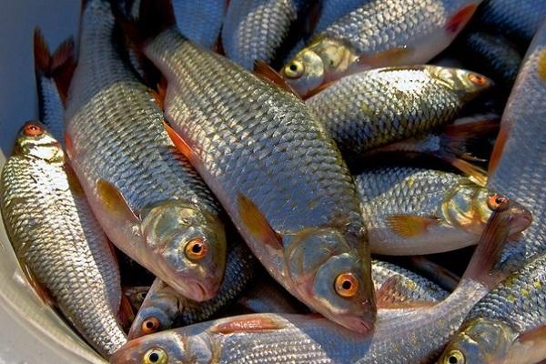Порушник завдав майже 4 тис. грн збитків, - рибоохоронний патруль Луганщини