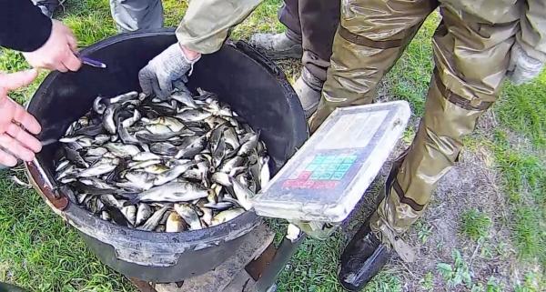 До водойм Луганщини було вселено понад 14 т. риби