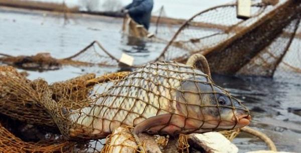 У жовтні викрито 42 порушення,- Луганський рибоохоронний патруль
